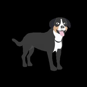 Dog Alphabets