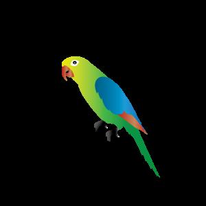 Parrot Alaphabets