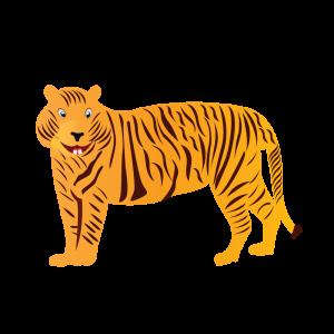 Tiger Alphabets