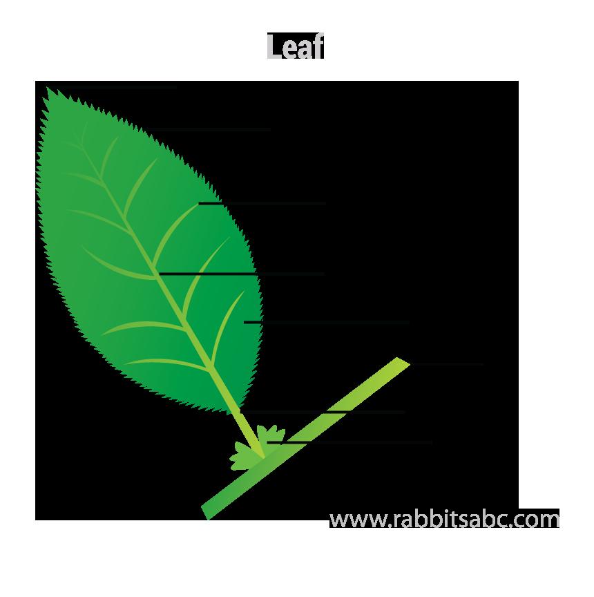 parts of plants parts of plants for kids rabbitsabc